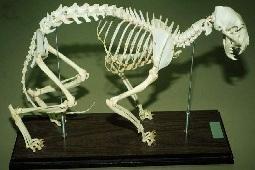 دانلود تحقیق چگونگى تهیه اسكلت حیوانات مهره دار